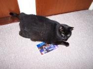 Blue Cat and a book