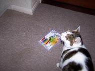 Vila Cat and a book