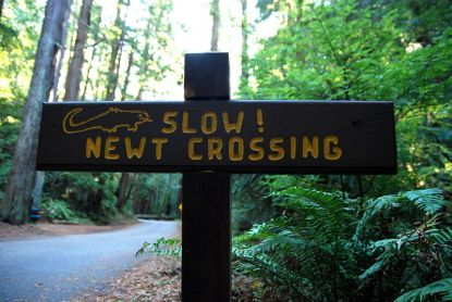 800px-Slow!_Newt_Crossing