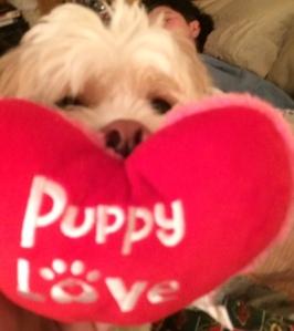 Ollie Puppy Love