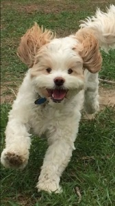 Ollie running smiling