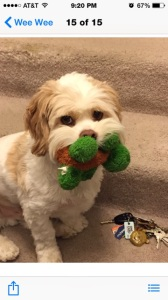 Ollie with green toy