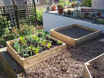Back Garden 030716 (6)