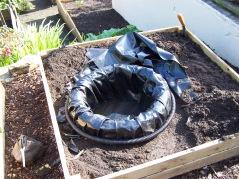 Back Garden 110716 (1).JPG