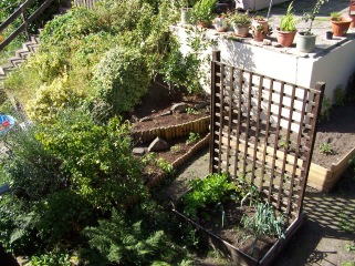 Back Garden from Above 120816 (3)