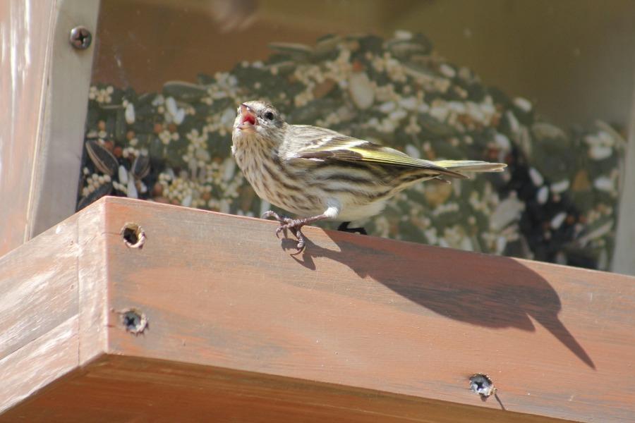 bird-3248855_1920