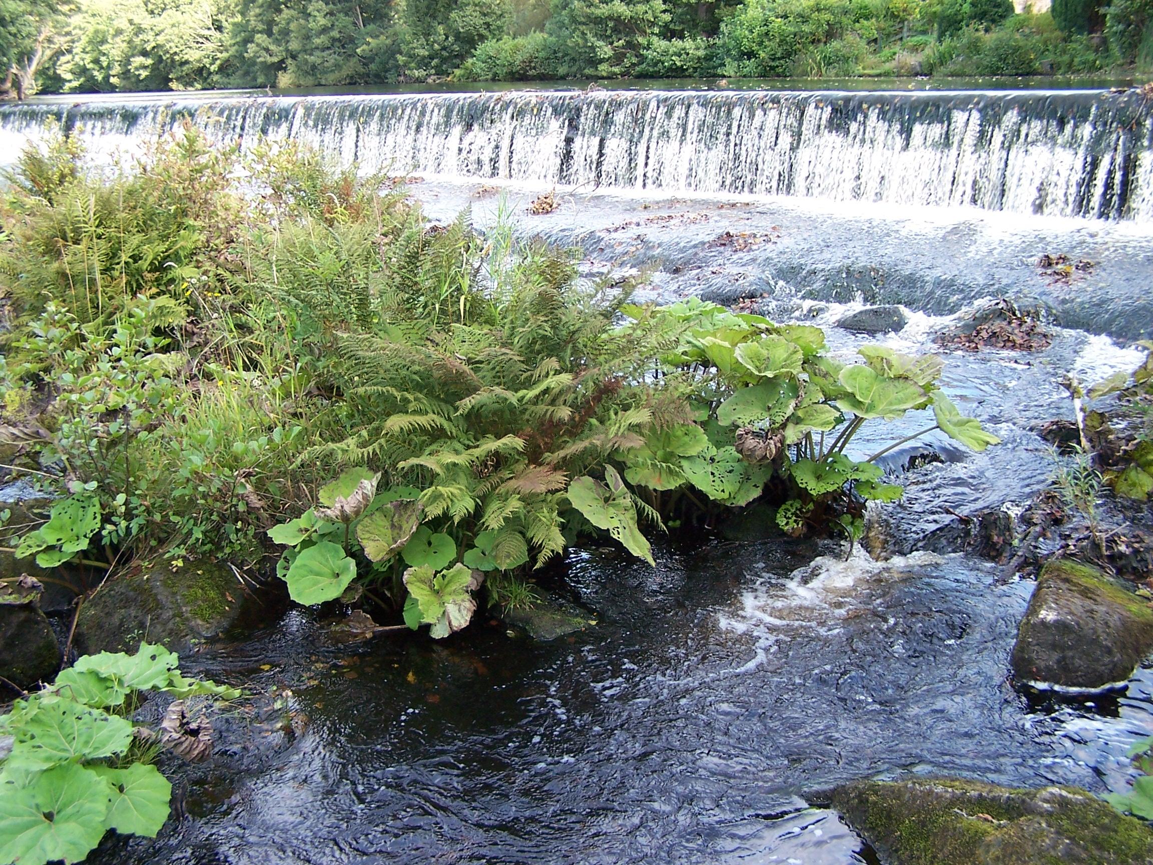 Bamford Water Themed Walk 13092020 (9)